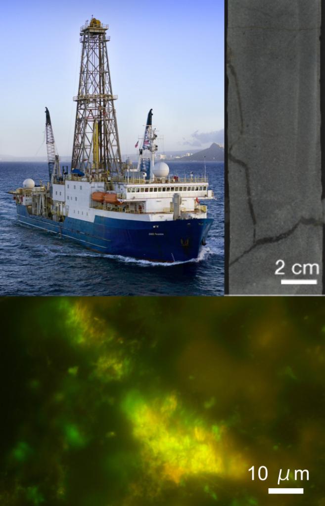 「常識覆す成果」海底地下の岩石1cm3当たりに100億細胞の微生物 -亀裂の粘土に濃集する有機物が密集の鍵-